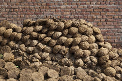Dung fuel Royalty Free Stock Image