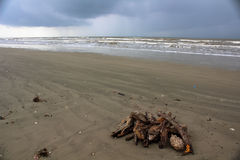Stack Of Driftwood. A lonely stack of driftwood decorates the beach at Galveston Island Stock Photo