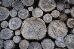 Stack of dry birch firewood Stock Photography
