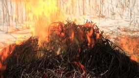 Stack of dry grass on fire stock footage