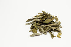 Stack of dry sage leaves Stock Images