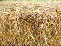 Stack of dry straw or hay