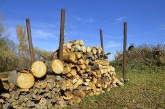 Stack of drying firewood Stock Image