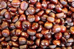 Stack of edible chestnuts as a background Royalty Free Stock Image