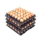 Stack of eggs in tray on white Stock Image