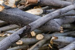 Stack of felled branches of trees. A pile of cut branches and trunks on the ground, lying on top of each other. Cutting of trees, stock image
