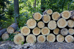 A stack of felled trees in the forest Royalty Free Stock Image