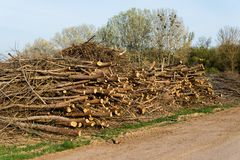 Stack of felled trees Stock Photos