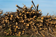 Stack of felled trees Royalty Free Stock Photography