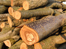 Stack of fire wood. Wood pile. Stack of fire wood Stock Images