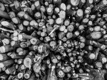 Stack of fire wood Stock Photography