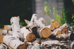 Stack of fire wood cut of birch in summer, nature and forest care concept Stock Image