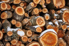 Stack of fire woods Stock Photos