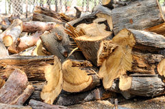 A stack of firewood. In the park Stock Photos