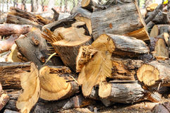 A stack of firewood. In the park Royalty Free Stock Photos