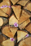 Stack of Firewood. Close-up of split firewood decorated with pink flowers Royalty Free Stock Images