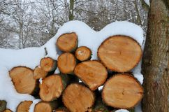 Stack of firewood covered in snow Royalty Free Stock Photography