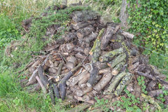 Stack of firewood. A stack of dry firewood near a camping place Royalty Free Stock Images