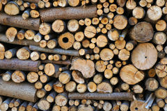 Stack of firewood. Stock Image