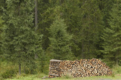 Stack of firewood by a forest Stock Photo