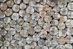 Stack of firewood. Stack firewood  forest fuel heap Royalty Free Stock Photo