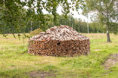 Stack of Firewood in Forest Glade Stock Image