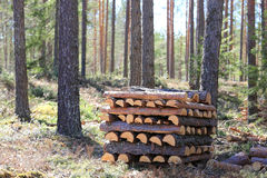 Stack of Firewood in Forest Royalty Free Stock Images