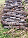A stack of firewood of holm oaks Royalty Free Stock Photography