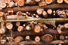 Stack of firewood. Stock Images