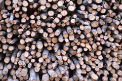 Stack of firewood Royalty Free Stock Images