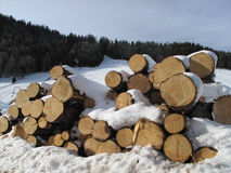 Stack of firewood under the snow Stock Photography