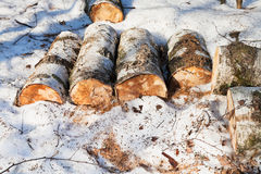 Stack of firewoods on snow Royalty Free Stock Image