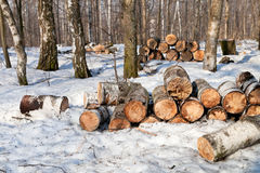 Stack of firewoods Stock Images