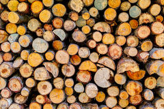 Stack of firewoods on the sun Stock Images