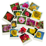 Stack of Flower shots collage background Royalty Free Stock Photos