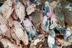 Stack of Fresh blue crab ( flower crab) Stock Photography