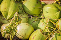 Stack of fresh coconuts Stock Photo