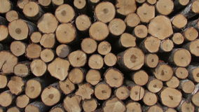Stack fresh cut birch and pine logs stock footage
