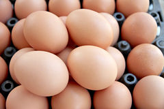 Stack of fresh egg Container box. Royalty Free Stock Photo