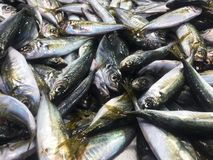 Stack of fresh fishes stock image