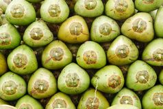 Stack of fresh green coconuts Stock Photo