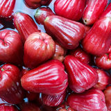 Stack of fresh Red rose apple Stock Photography