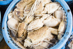 Stack of fresh squid in basket sold in fish dock market Royalty Free Stock Photo