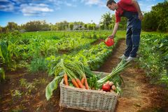 Stack with vegetables and gardener watering garden Royalty Free Stock Photo