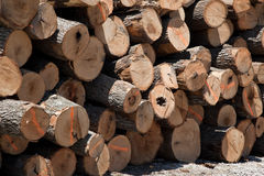 Stack of freshly cut logs Stock Photo