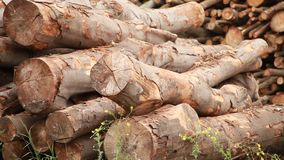 Stack of freshly cut logs. Forestry concept stock video footage