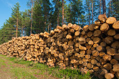 Stack of freshly cut trees. Destruction forests death green human activities Royalty Free Stock Images