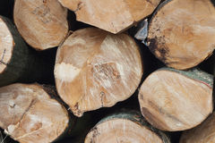 Stack of freshly sawn beech logs in closeup Royalty Free Stock Photos