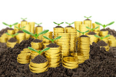 Stack of golden coins with ground and green plant Royalty Free Stock Photo