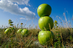Stack of green apples Stock Photos
